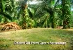 """#6 - Malaysian Palm Oil Council claims to """"cool the earth, clean the air, and fight against global warming."""" In reality it contributes to massive deforestation."""